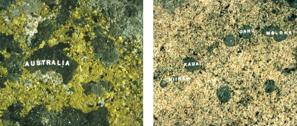 Moss-Maps-3-990x422